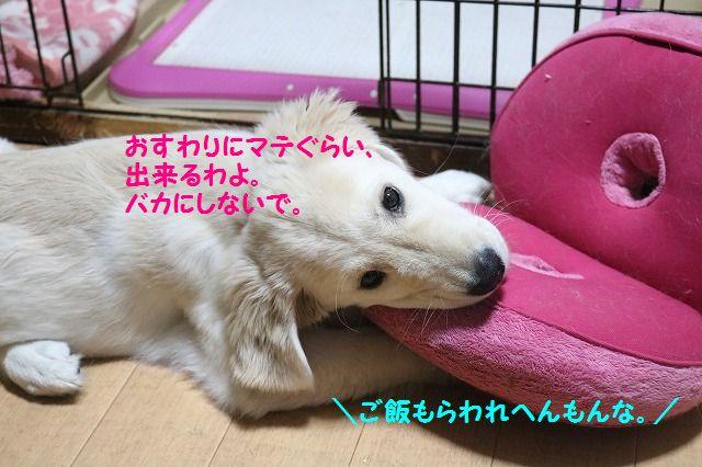 IMG_8177_2016112123210126a.jpg