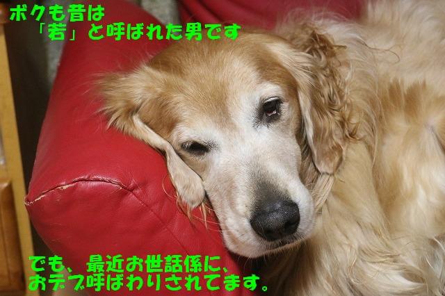 IMG_8558_2016112418512652c.jpg