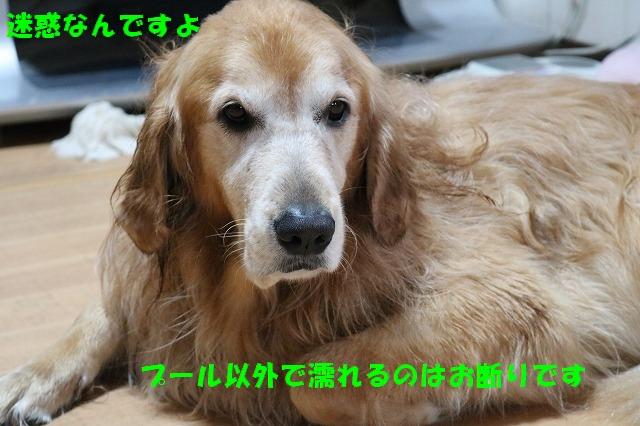 IMG_8711_20161126201040001.jpg