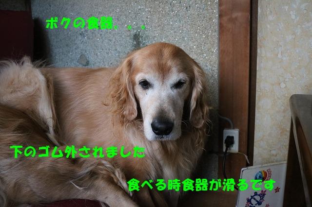 IMG_8946.jpg