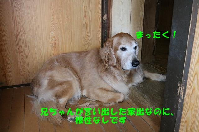 IMG_8952_20161129171356306.jpg