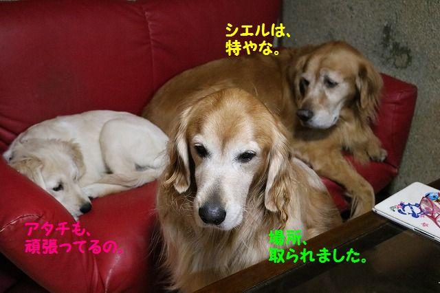IMG_8976.jpg