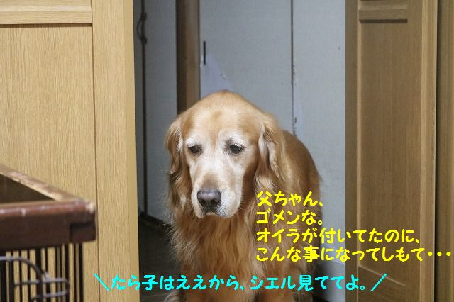 IMG_9084_20161201223134a71.jpg