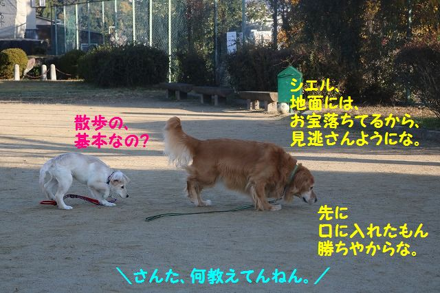 IMG_9334.jpg