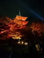 そうだ京都へ行こう 京都 旅行