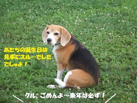 014_convert_20160726001747.jpg