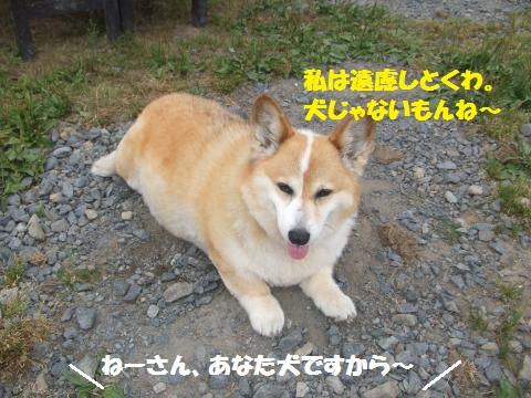 031_convert_20160616024554.jpg