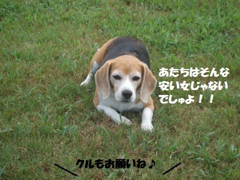 048_convert_20160901004806.jpg