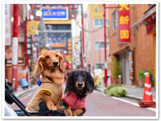 ランチ会☆横浜中華街