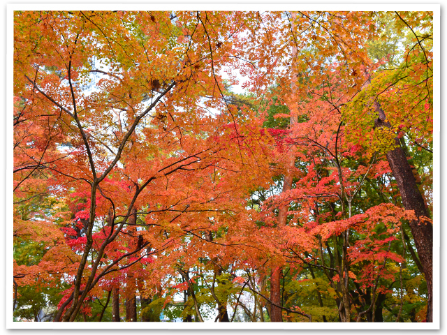 紅葉☆月の石もみじ公園