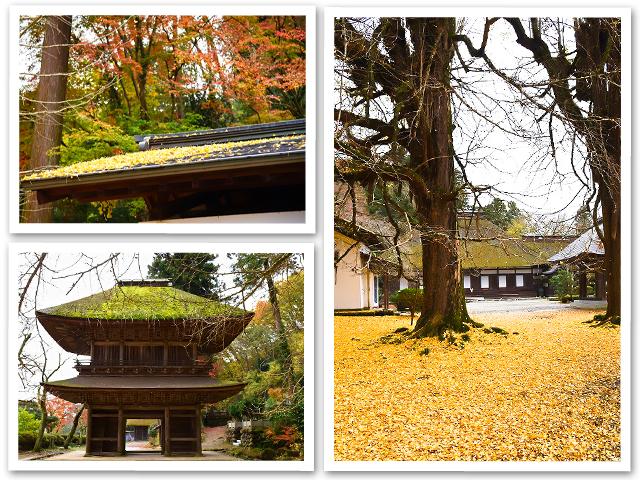 散歩☆広徳寺