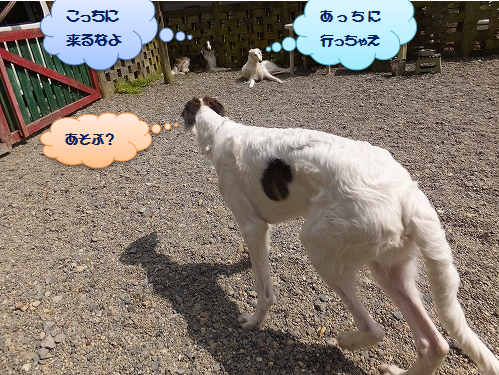 2016.4.23~24 オーキャン宝島 008