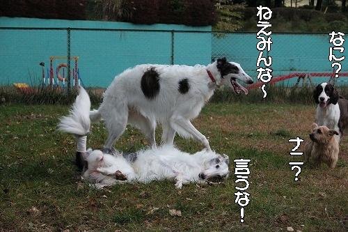 2016.10.22~23 八ヶ岳わんわんパラダイス&コーシングオフ会 087