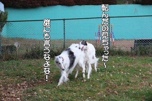2016.10.22~23 八ヶ岳わんわんパラダイス&コーシングオフ会 086