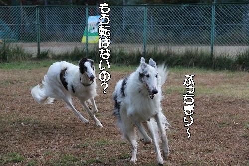 2016.10.22~23 八ヶ岳わんわんパラダイス&コーシングオフ会 095