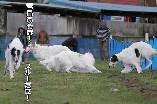 2016.10.22~23 八ヶ岳わんわんパラダイス&コーシングオフ会 218