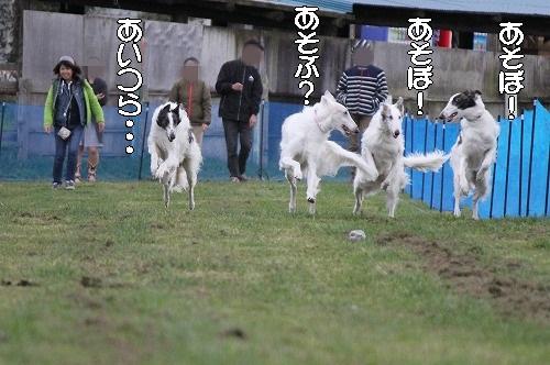 2016.10.22~23 八ヶ岳わんわんパラダイス&コーシングオフ会 212