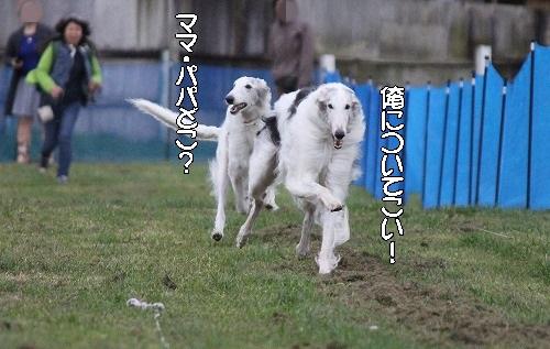 2016.10.22~23 八ヶ岳わんわんパラダイス&コーシングオフ会 248