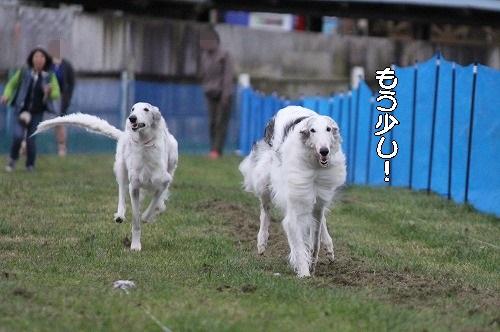 2016.10.22~23 八ヶ岳わんわんパラダイス&コーシングオフ会 252