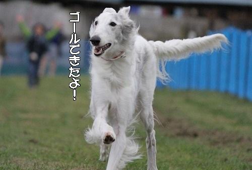 2016.10.22~23 八ヶ岳わんわんパラダイス&コーシングオフ会 257