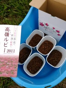 20160903紅そば畑2