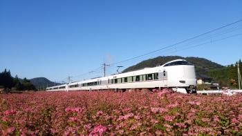 20161102紅そば畑4