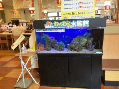 160521はま寿司都島本通店待合席の水槽
