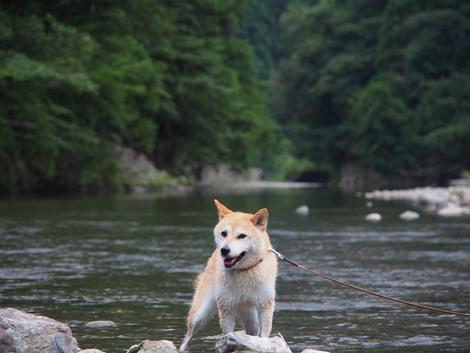 美山で川遊び
