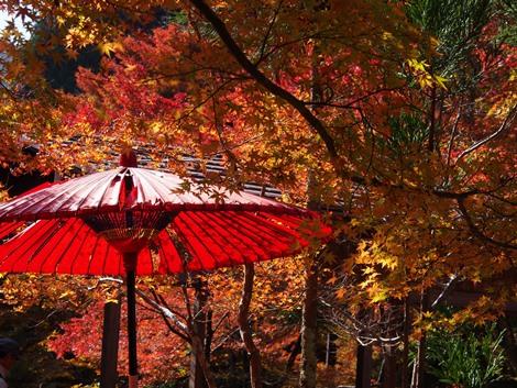 和傘が・・・