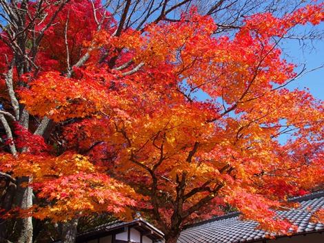 The 紅葉♪