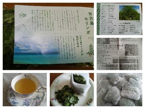 平成28年10月13日モリンガ茶