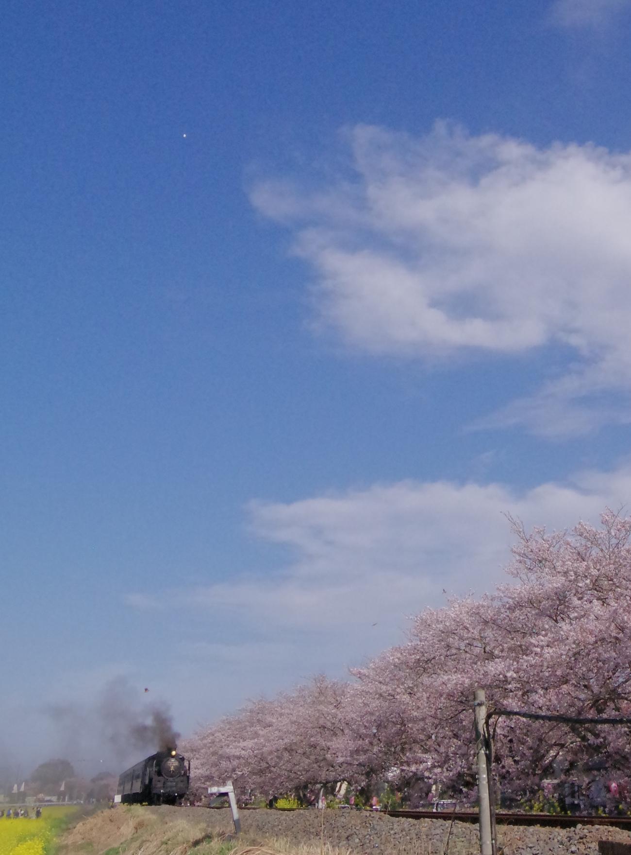 160409hito-hira.jpg