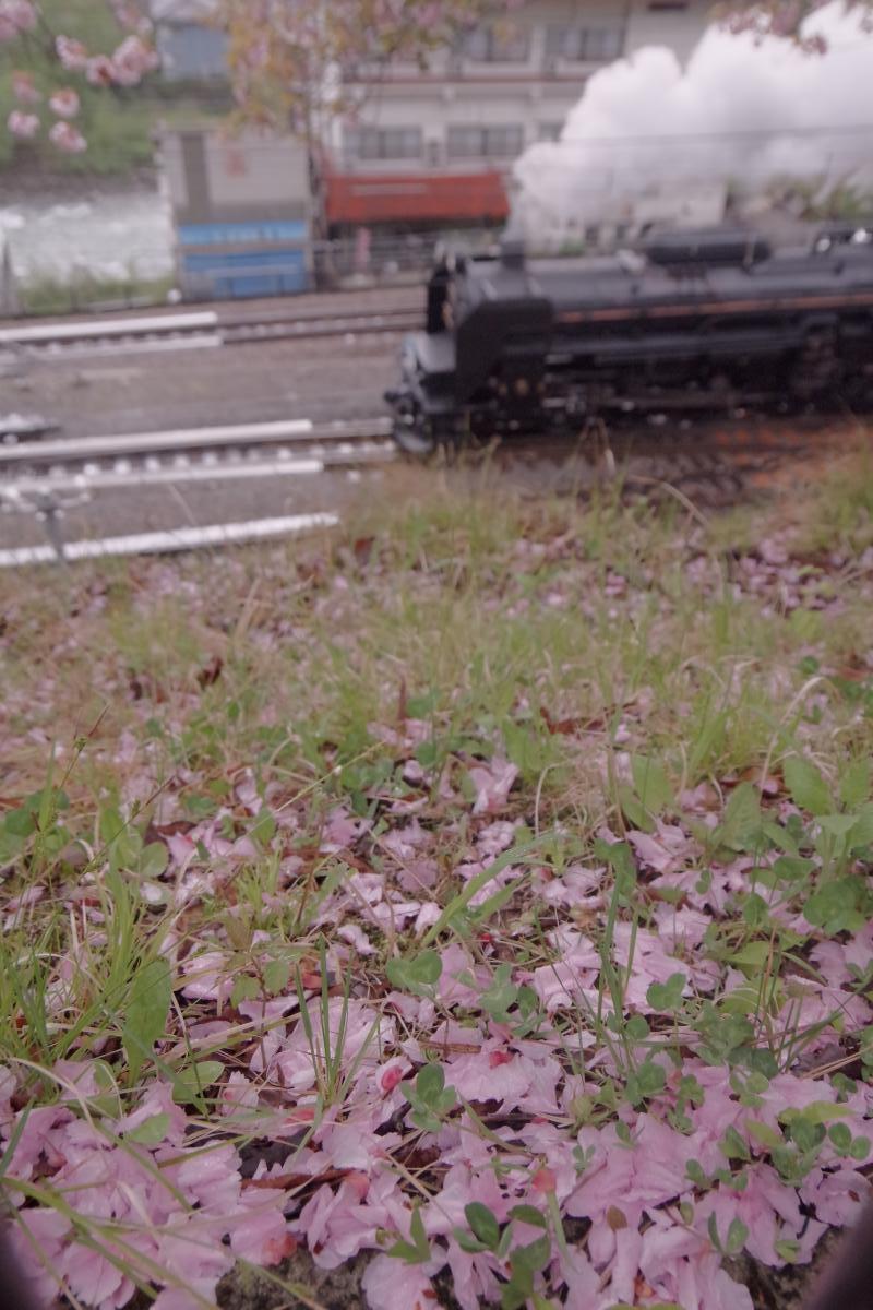 160429yotsuba-.jpg
