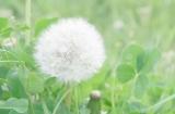 clover-.jpg