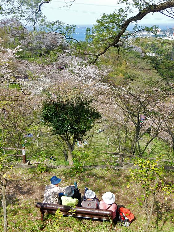 塚山公園の桜3