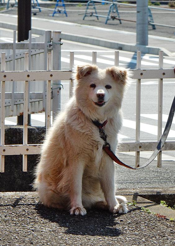 160327 笑う犬1