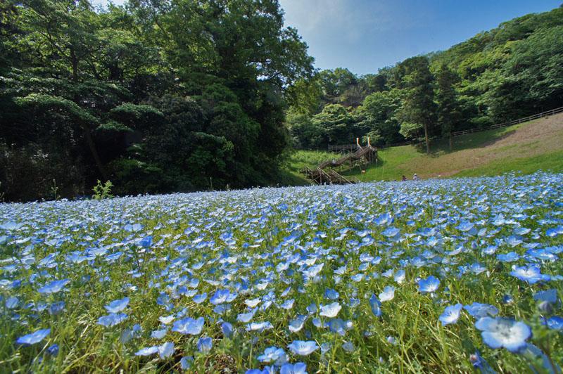 160501花の国1