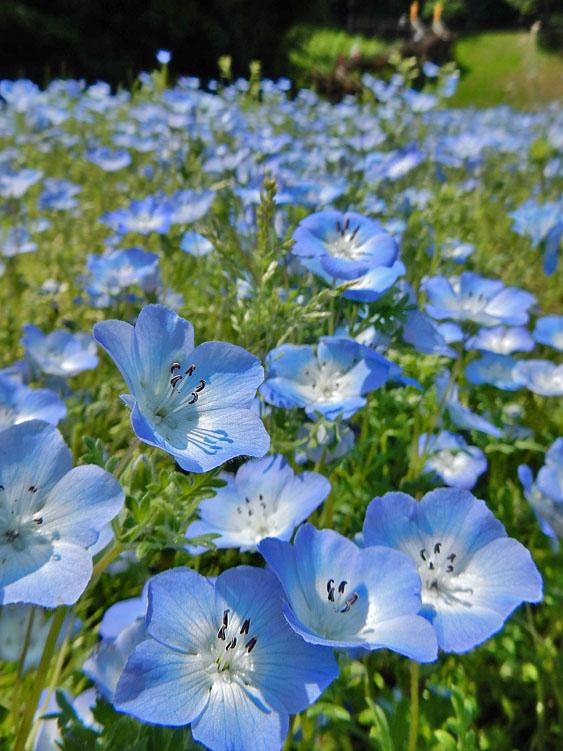 160501花の国2