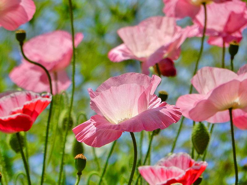 160501花の国5