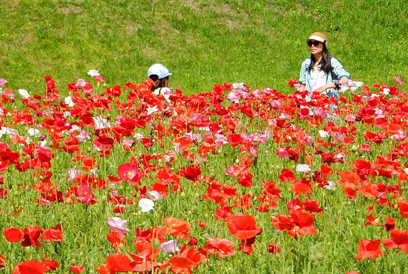 160501花の国4
