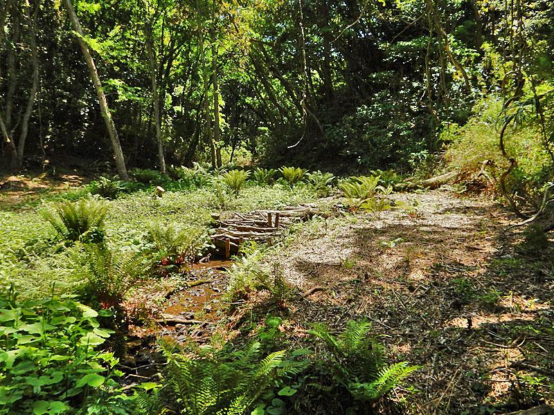 160505小網代の森2