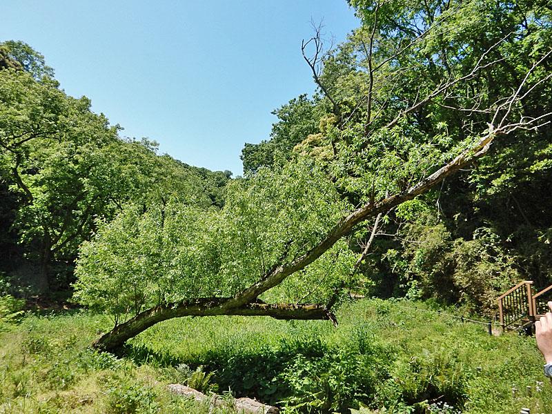 160505小網代の森3