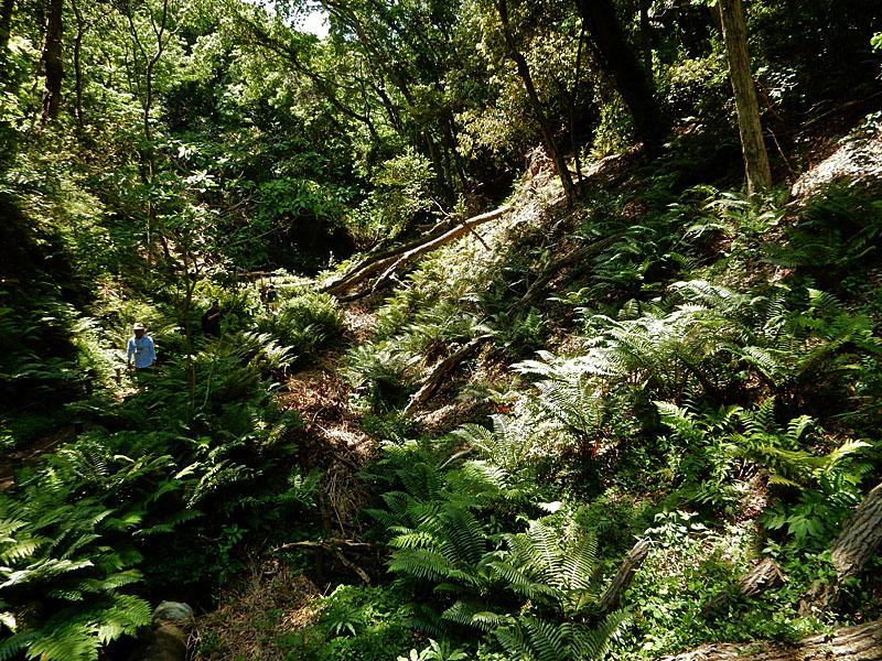 160505小網代の森4