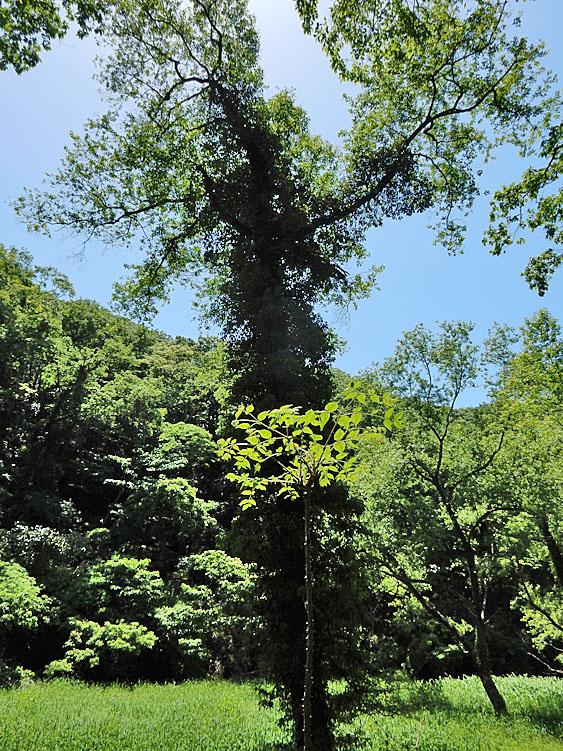 160505小網代の森5