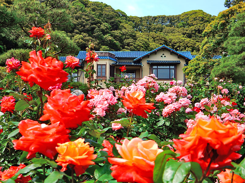 160514鎌倉文学館のバラ4