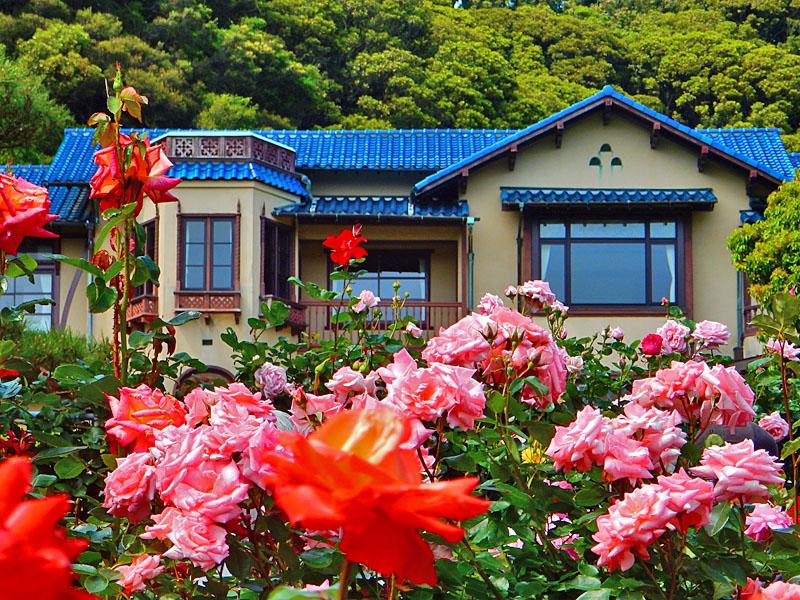 160514鎌倉文学館のバラ5