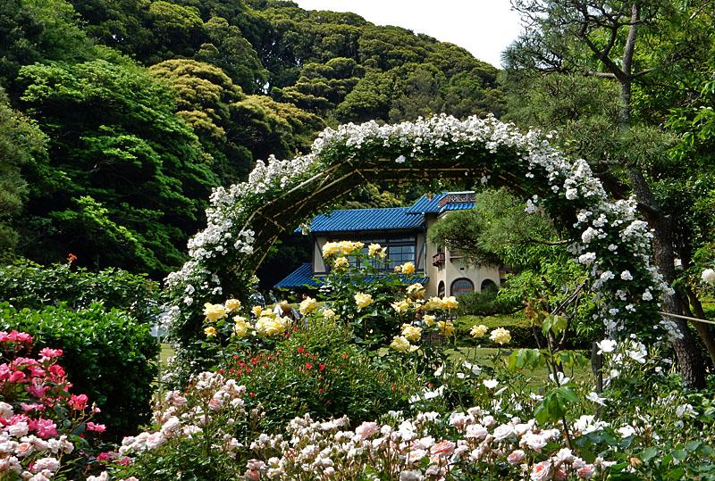 160514鎌倉文学館のバラ6
