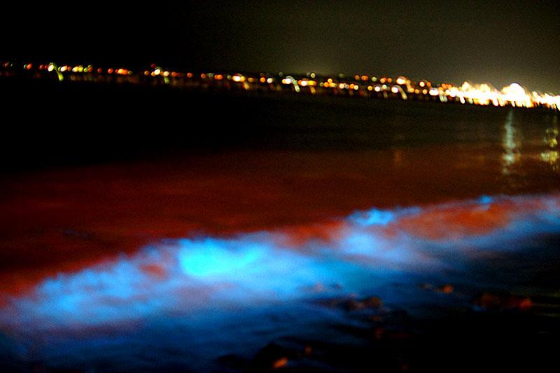 160529赤潮と夜光虫@野比海岸3