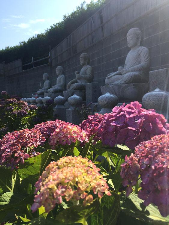160618仏像とあじさい@妙音寺01