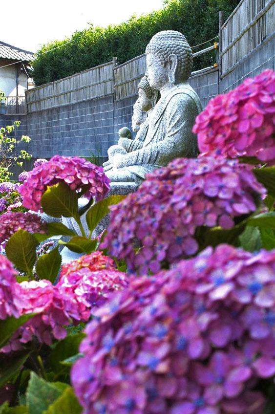 160618仏像とあじさい@妙音寺02